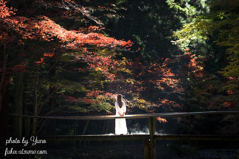 静岡県周智郡森町一宮・小國神社・小さな木の橋・光芒・紅葉・ドラマ・モデル・絶景5