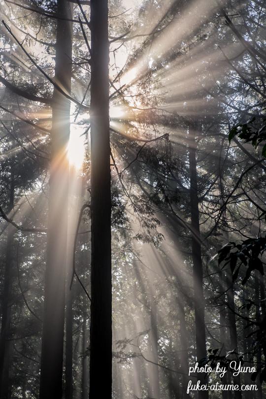 光芒・斜光・霧・森・木々1