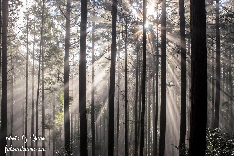 光芒・斜光・霧・森・木々2