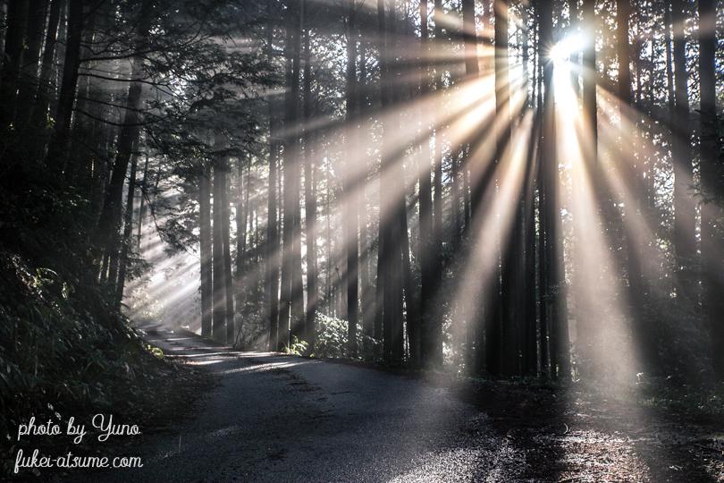 光芒・斜光・霧・森・木々・道