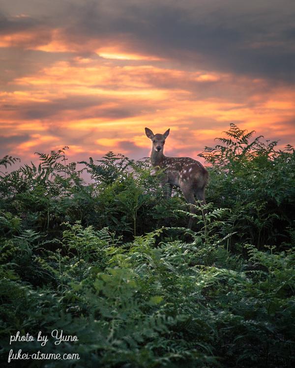 奈良・若草山・夕焼け・夕暮れ・鹿