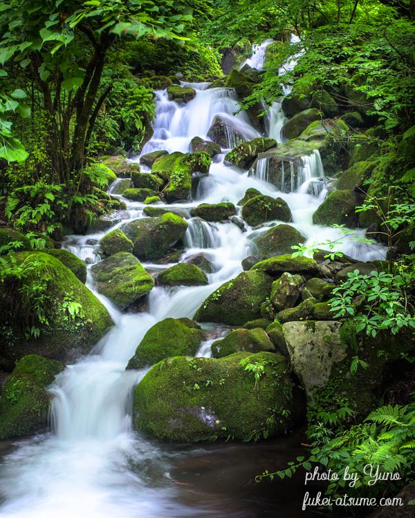 鳥取県鳥取市国府町雨滝・雨滝渓谷・仏谷渓谷・仏谷の滝・苔・緑・癒し・マイナスイオン・清流・渓流
