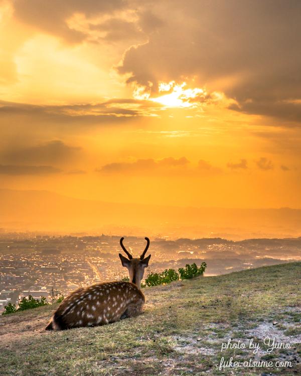 奈良・若草山・夕焼け・黄昏・鹿