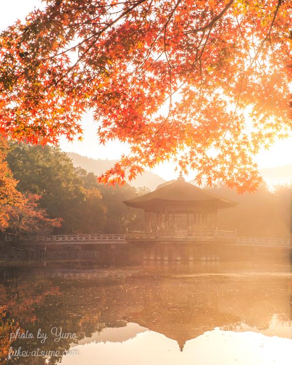 奈良・奈良公園・浮見堂・紅葉・朝陽・夜明け・リフレクション