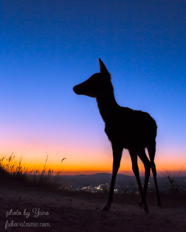 奈良・奈良公園・若草山・鹿・シルエット・夕焼け・夕空・グラデーション・マジックアワー・夜景・夕景
