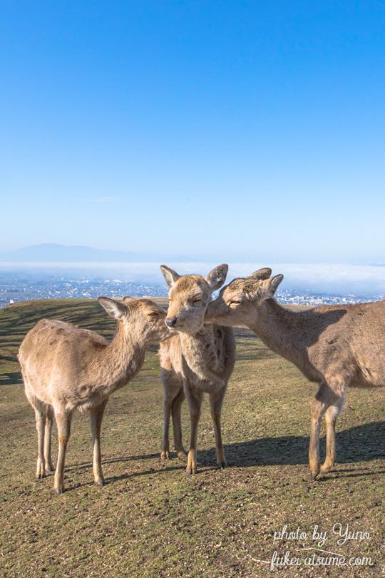 奈良公園・若草山・鹿・毛繕い・ほっこり・青空