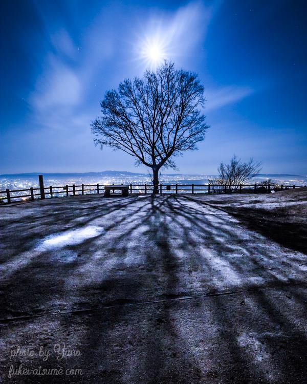 奈良公園・若草山・冬・月・満月・月光・影・夜景