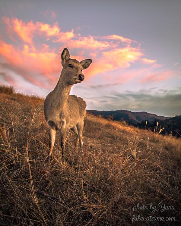 奈良公園・若草山・鹿・荒野・夕焼け・冬