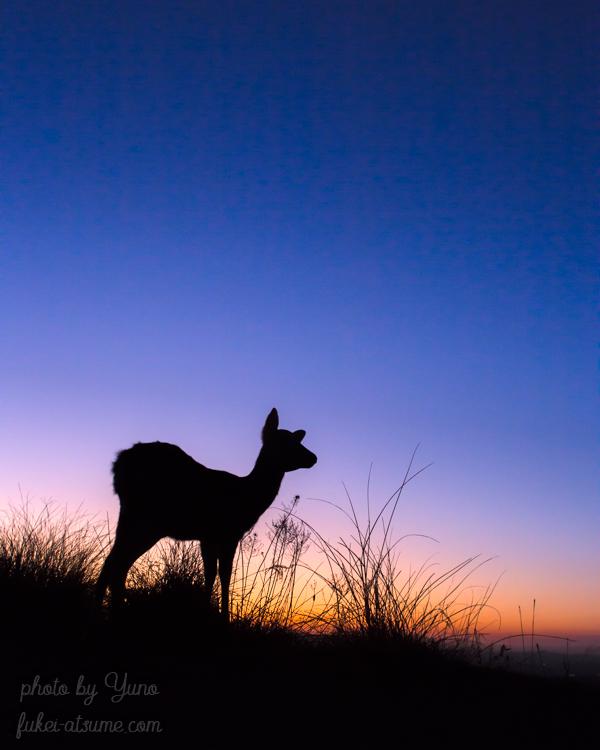 奈良公園・若草山・鹿・シルエット・マジックアワー・夕暮れ・夕焼け・グラデーション