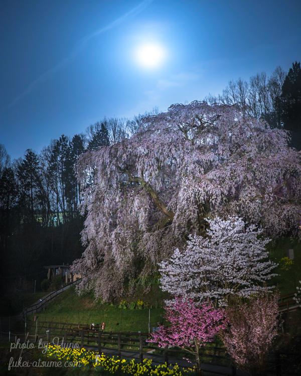 奈良・宇陀・又兵衛桜・満開・春・満月・月夜