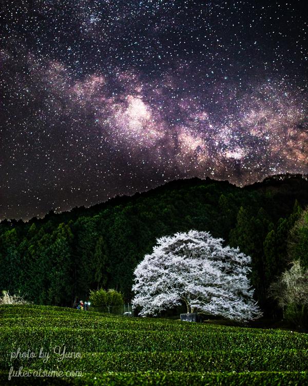 三重・淡墨桜・天の川・星空・お茶畑・絶景